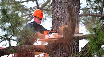 Arborist cutting through branches